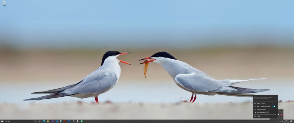 デスクトップ背景 鳥